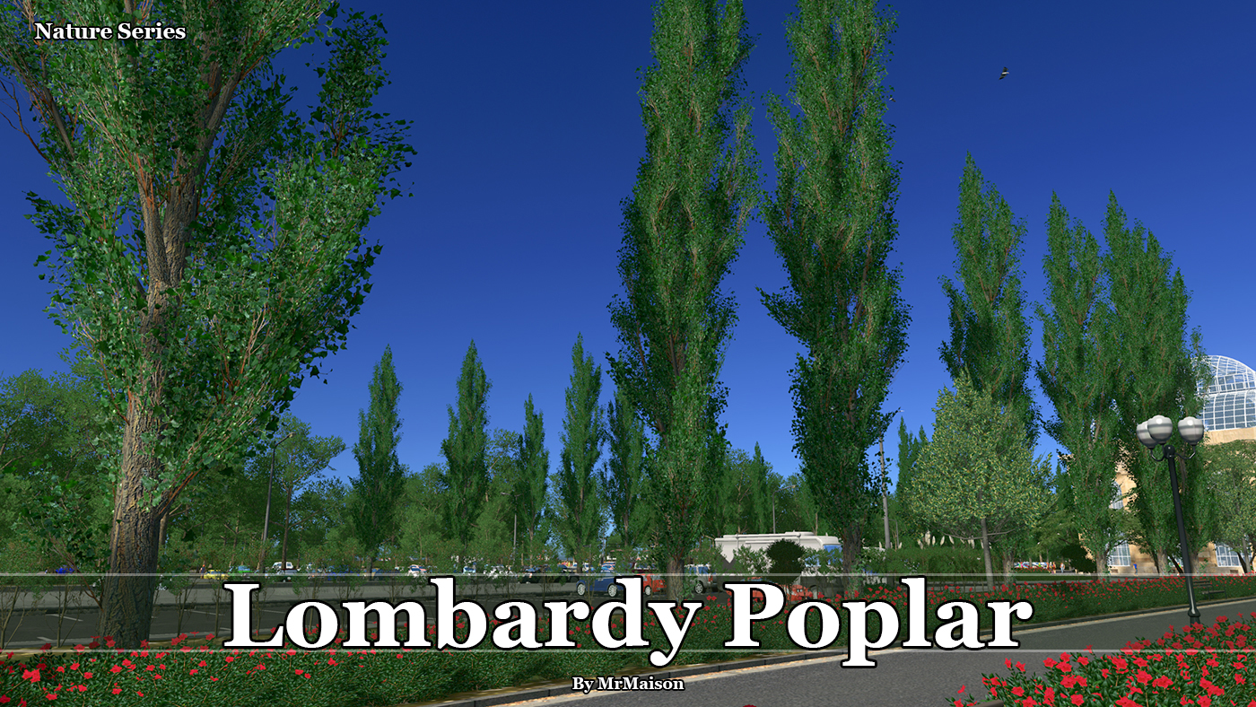 PoplarPromo.jpg