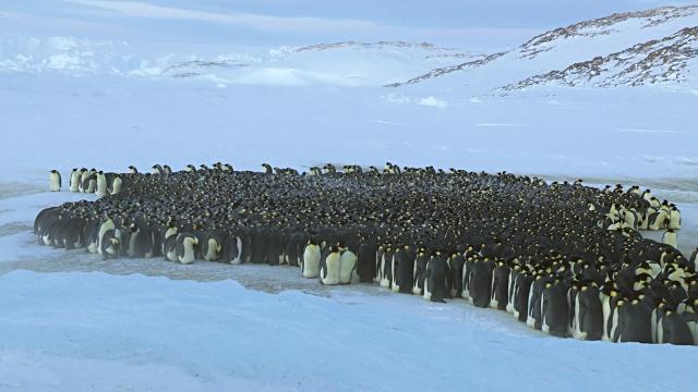 2211-flock.jpg