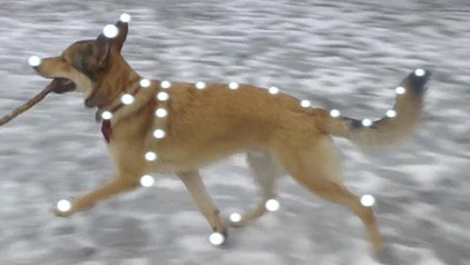 dogsofwar_mocap.jpg