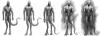 alien_race_concept_wip_7_by_mr_goblin-d56esz5.png
